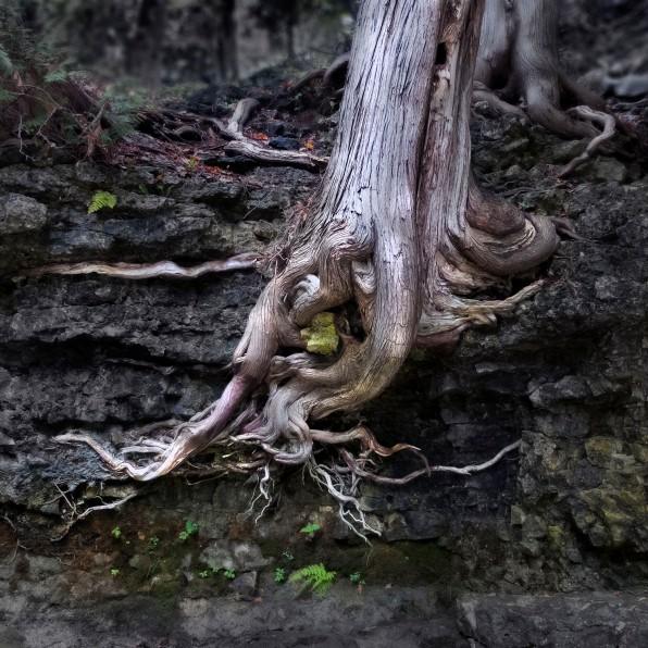 Elora.2017_tree.root
